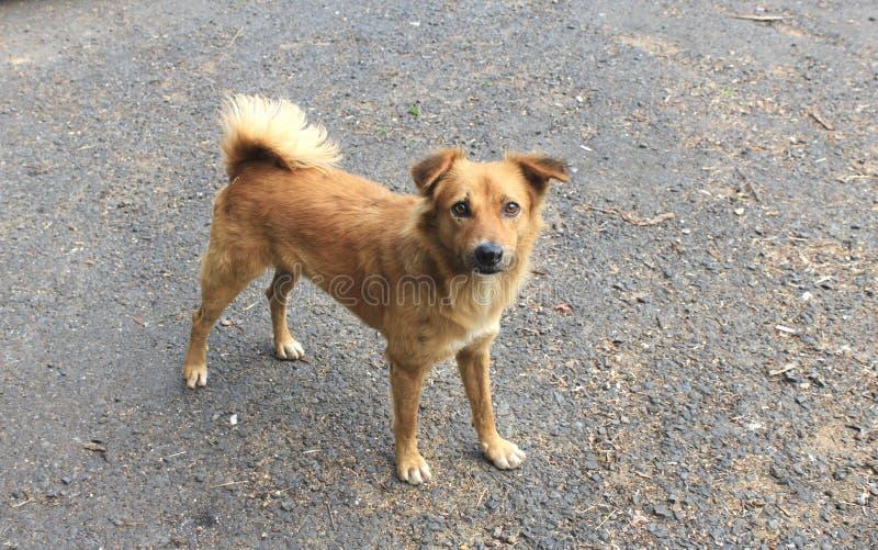 Un perro que presenta para la cámara fotografía de archivo libre de regalías