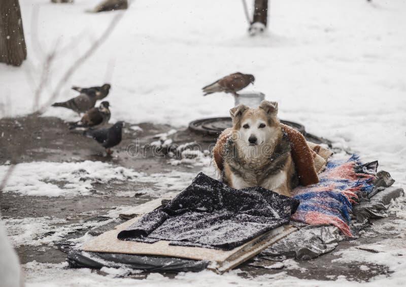 Un perro sin hogar miente en la nieve debajo de una manta Cuidado de animales sin hogar fotografía de archivo