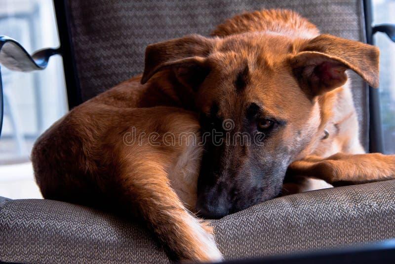 Un perro triste imagenes de archivo