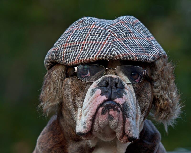 Un perro vestido pasado de moda imagen de archivo