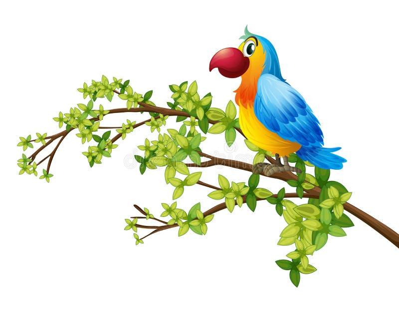 Un perroquet coloré illustration de vecteur