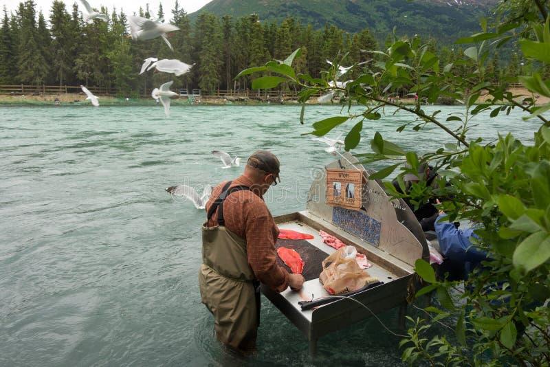 Un pescado de la limpieza del hombre en una estación situada a lo largo del río ruso en Alaska fotos de archivo
