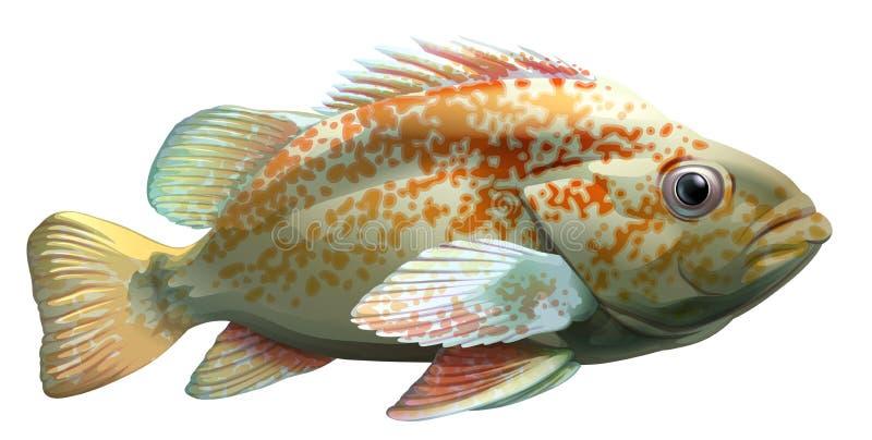 Un pescado grande libre illustration