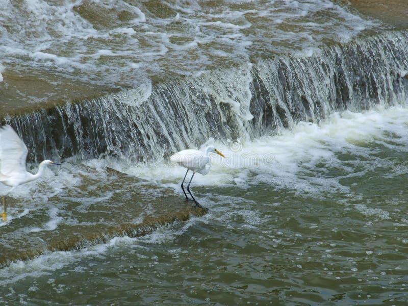 Un pescado grande en cuello largo foto de archivo libre de regalías
