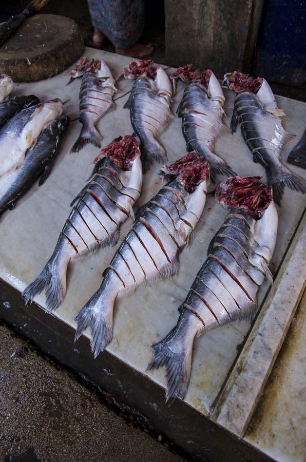 Un pescado grande en Myanmar fotografía de archivo libre de regalías