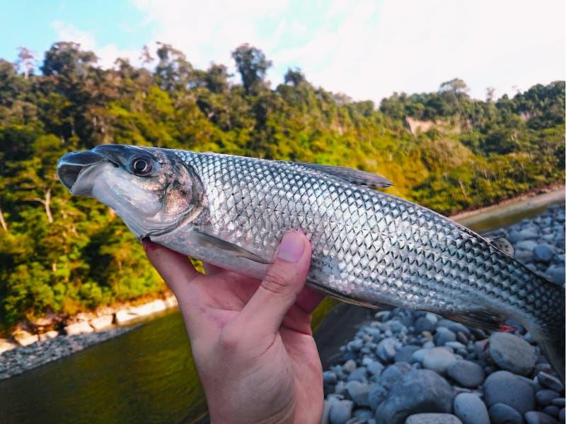 Un pesce nelle mani fotografia stock