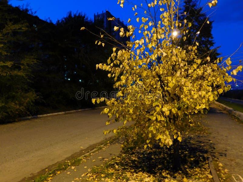 Un petit arbre d'automne photographie stock