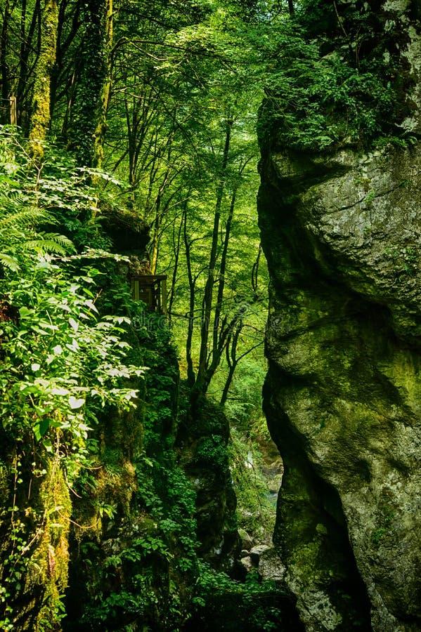 Un petit canyon dans la forêt photos libres de droits