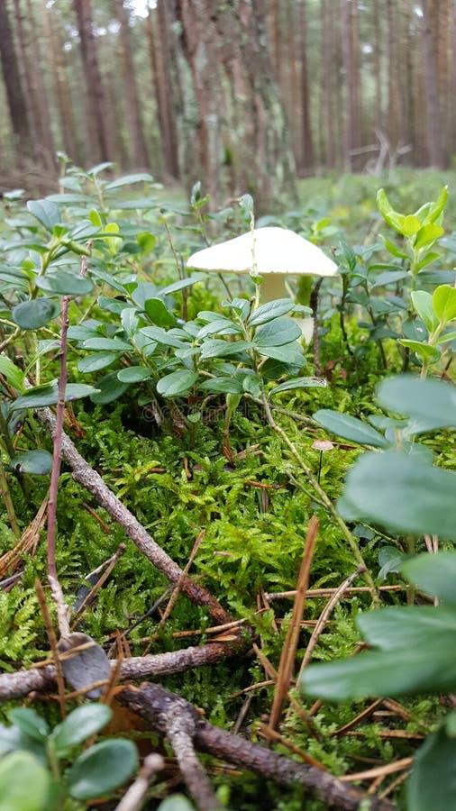 Un petit champignon de forêt parmi des usines images stock