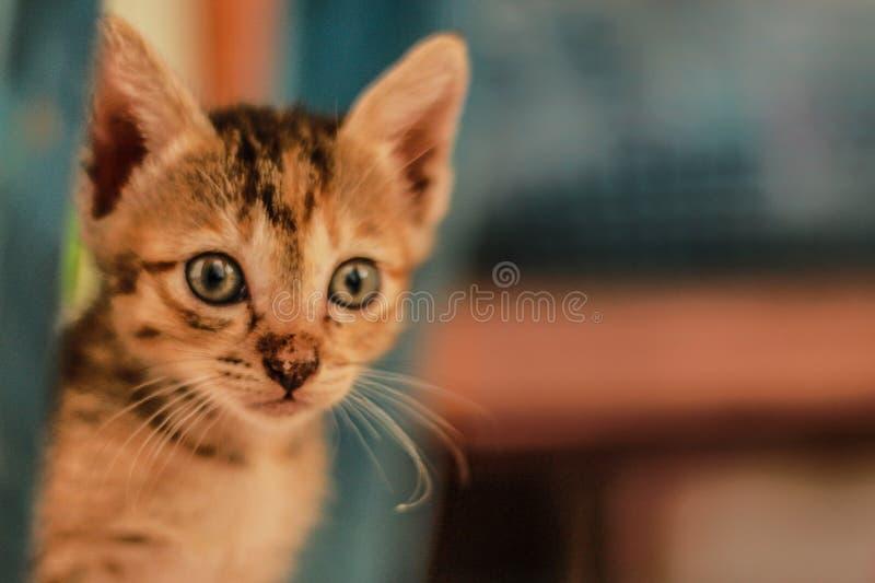 Un petit chat orange jouant heureusement photographie stock