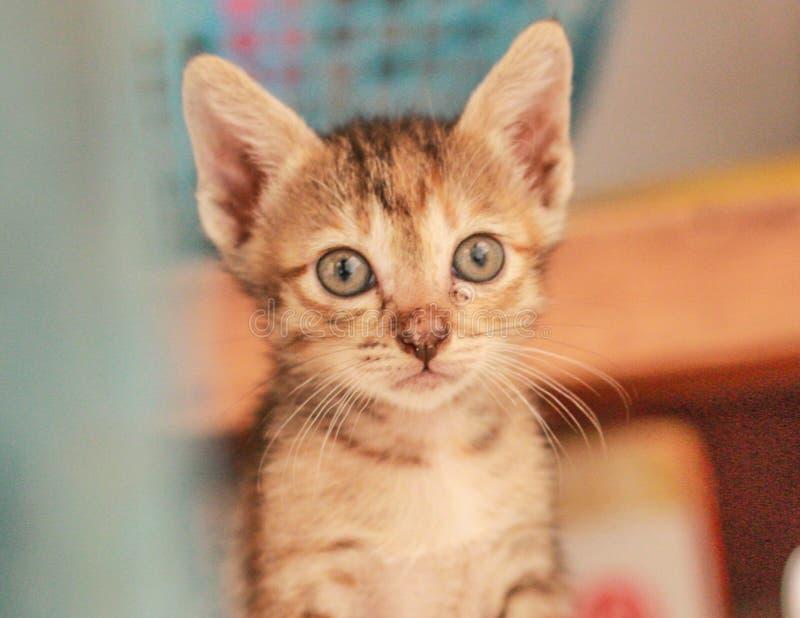 Un petit chat orange jouant heureusement images libres de droits