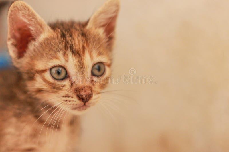 Un petit chat orange jouant heureusement image stock
