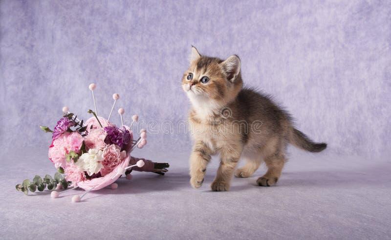 Un petit chaton de pure race se tient à côté d'un bouquet des fleurs images libres de droits