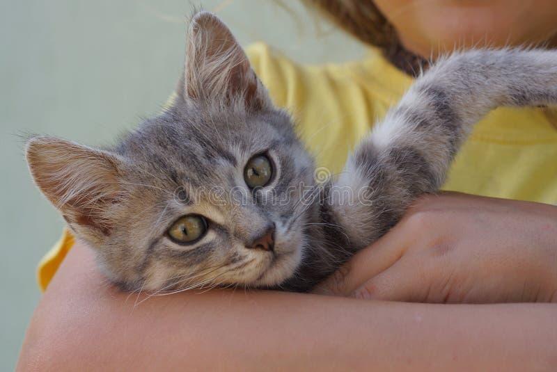 Un petit chaton gris se trouve sur la main d'une fille photo libre de droits