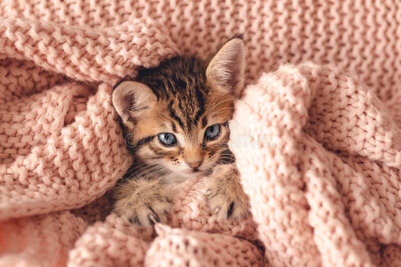 Un petit chaton rouge mou dort sur une couverture blanche en fourrure photographie stock