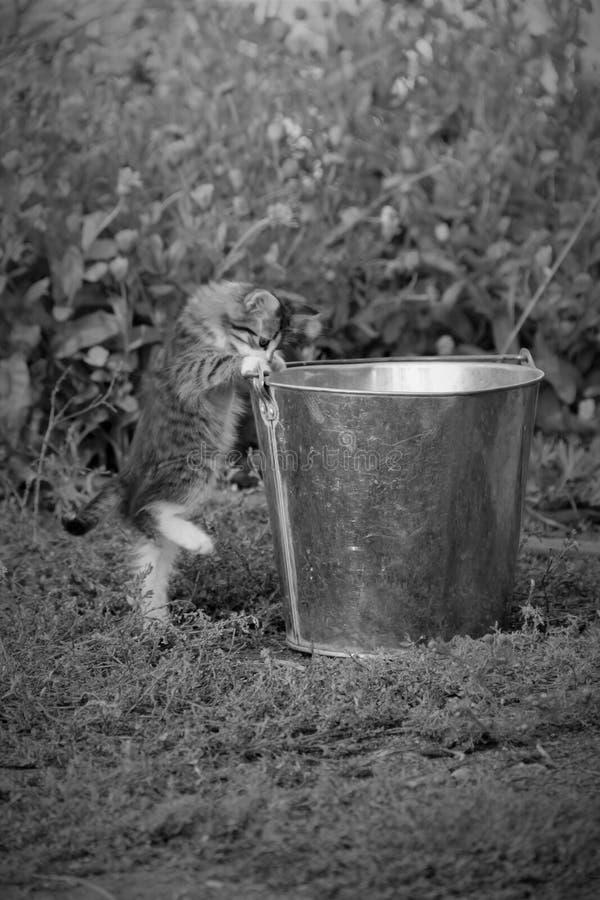Un petit chaton velu curieux image libre de droits