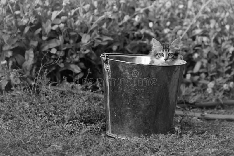 Un petit chaton velu curieux photos libres de droits