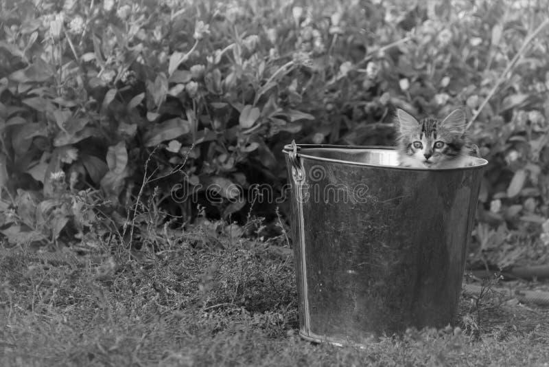 Un petit chaton velu curieux photographie stock libre de droits