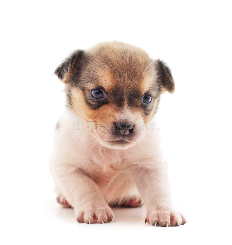 Un petit chien photographie stock