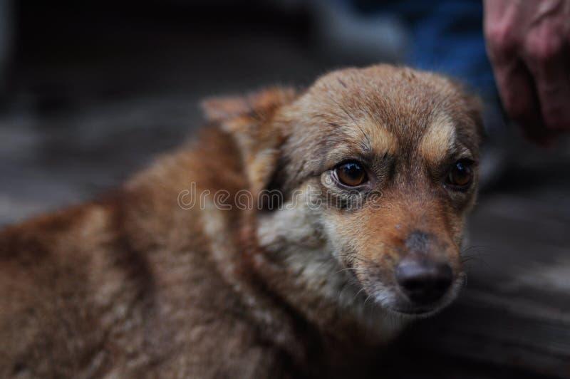 Un petit chien effrayé images libres de droits