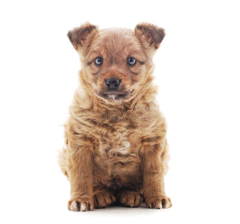 Un petit chien photos stock