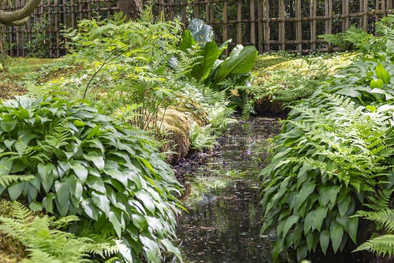 Un petit courant avec des fougères et des Hostas et mousse dans le jardin japonais en parc Clingendael, la Haye photo stock