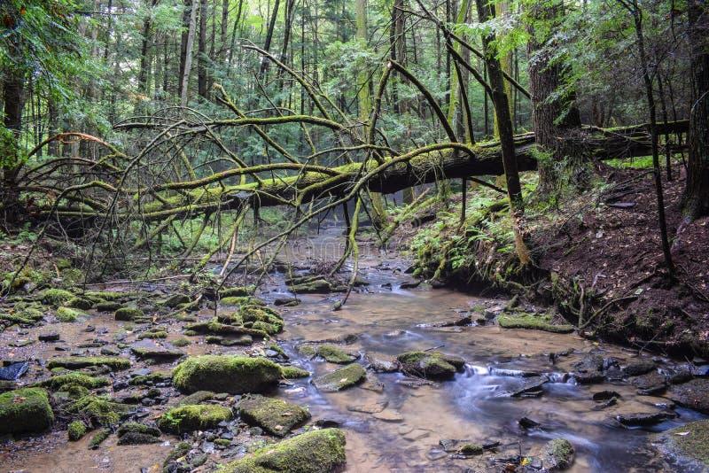 Un petit courant de truite dans les Appalaches photo libre de droits