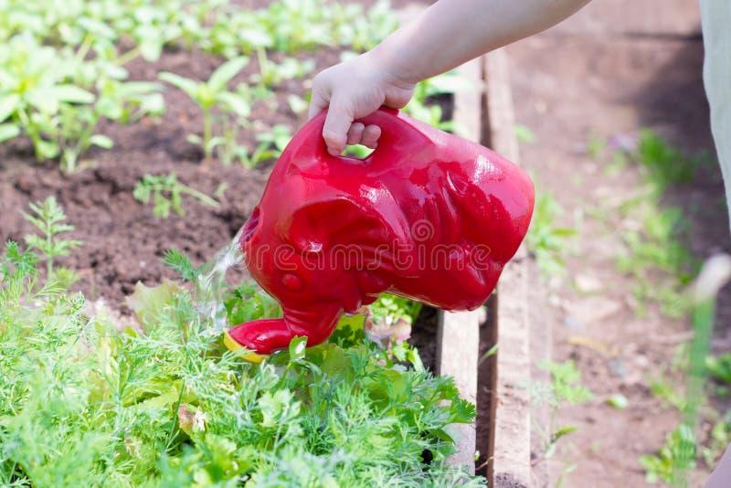 Un petit enfant arrosant la verdure dans le jardin photos libres de droits
