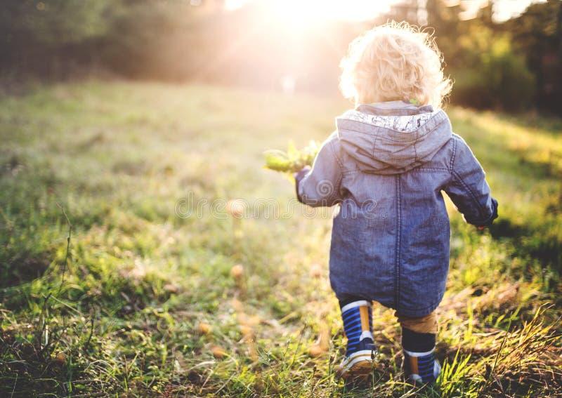 Un petit garçon d'enfant en bas âge marchant dehors sur un pré au coucher du soleil blanc d'isolement de vue arrière photographie stock