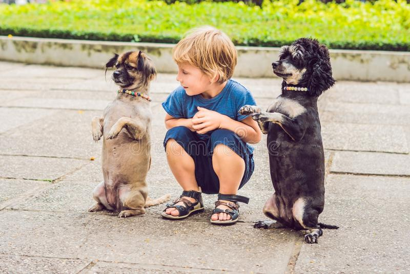 Un petit garçon joue avec de petits chiens images stock
