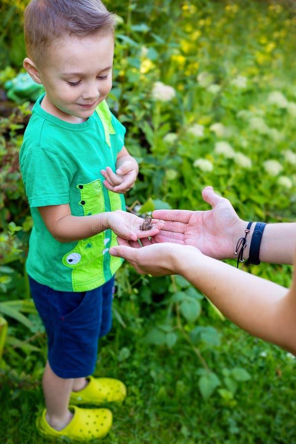 Un petit garçon joue avec une grenouille en nature Badine la découverte images libres de droits