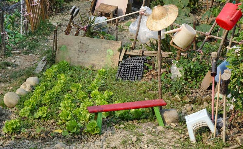 Un petit jardin urbain végétal photo libre de droits