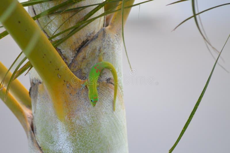 Un petit lézard vert se reposant sur un palmier ! photographie stock
