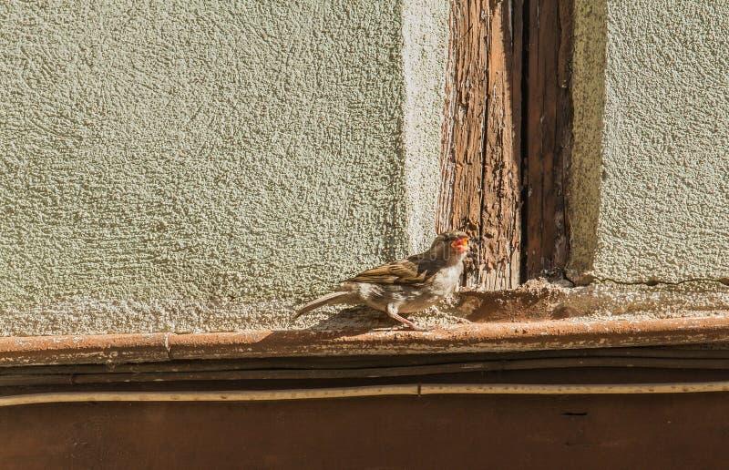 Un petit oiseau sur une corniche photo libre de droits