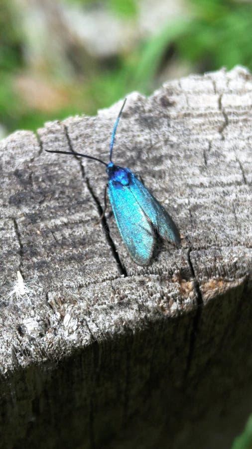 Un petit papillon bleu se repose sur la surface en bois d'une vieille barrière fond abstrait de trois-couleur, l'espace de copie  photo libre de droits