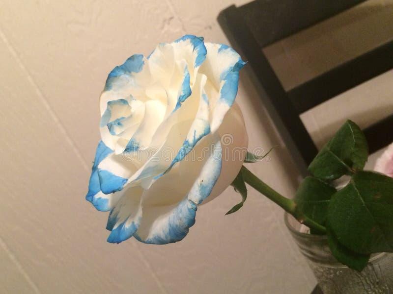 Un petit peu de bleu photo stock