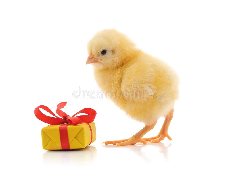 Un petit poulet avec un cadeau images libres de droits
