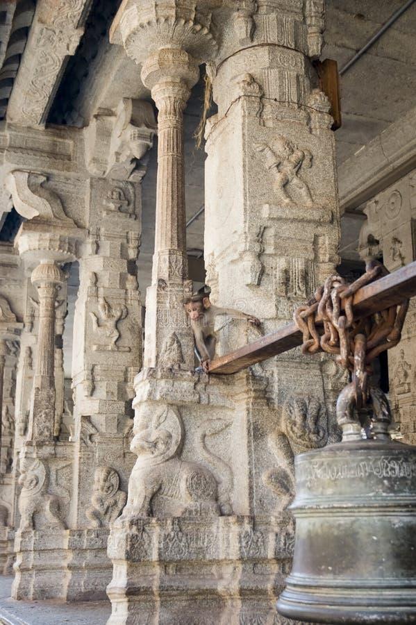 Un petit singe curieux piaule par derrière les colonnes d'un temple indien antique photo libre de droits