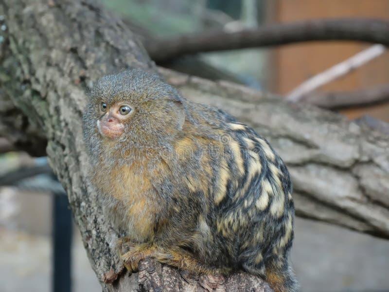 Un petit singe dans un arbre photographie stock