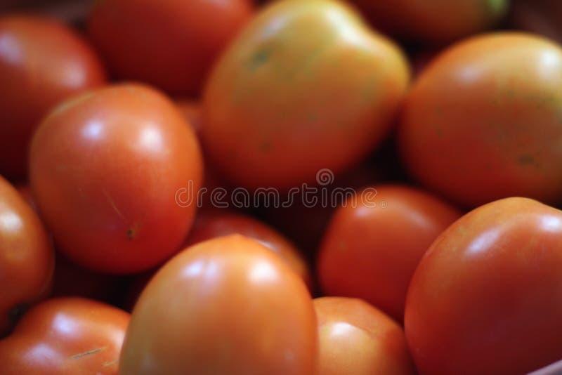 Un peu de tomates fraîches photographie stock