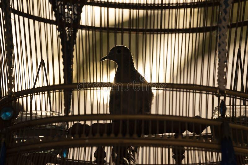Un pezzo da galera nella gabbia di bambù immagini stock