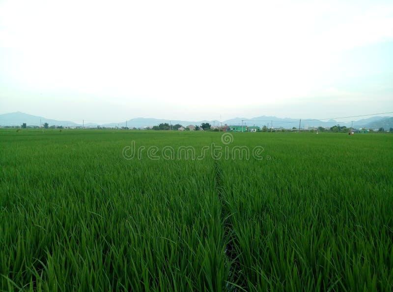 Un pezzo di campi verdi fertili immagine stock