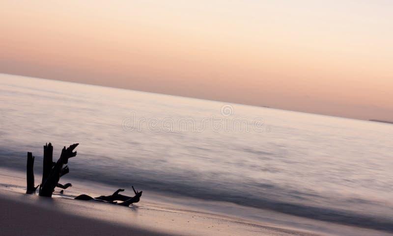 Un pezzo di soggiorni del legname galleggiante ancora durante il tramonto nel Tonga fotografie stock