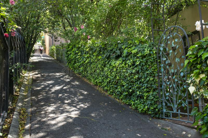 Un piéton marche par le soleil tacheté sur le chemin de coupure dans Berkeley, CA image stock