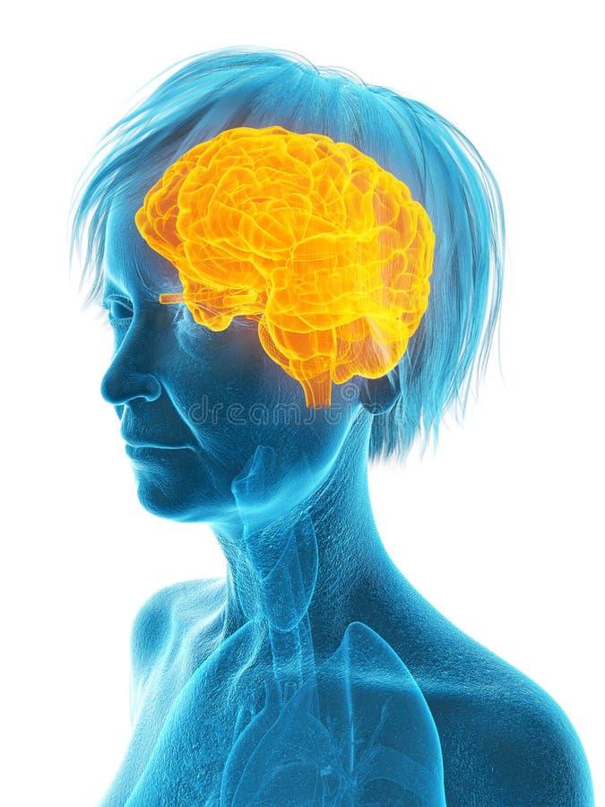 Un più vecchio cervello delle femmine illustrazione vettoriale