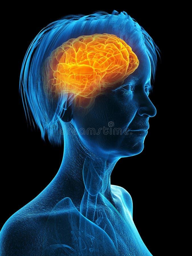 Un più vecchio cervello delle femmine royalty illustrazione gratis