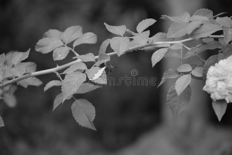 Un pic naturale fotografia stock