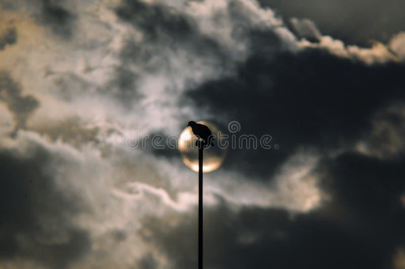 Un piccione che si siede su un palo ha diretto verso il sole fotografia stock