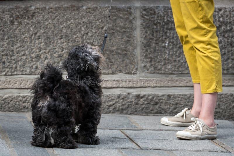 Un piccolo cane nero sveglio sulla via immagine stock libera da diritti
