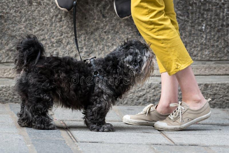 Un piccolo cane nero sveglio sulla via fotografie stock libere da diritti